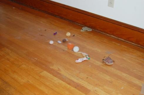 Cat Toys Revealed