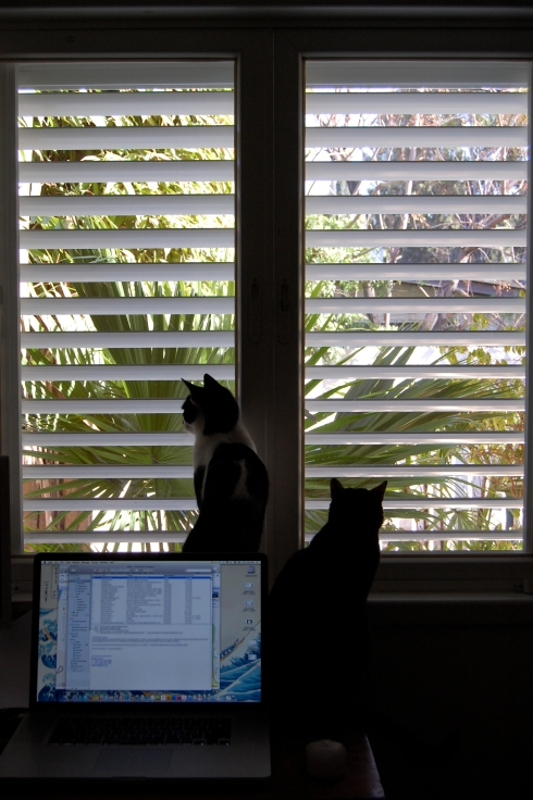 Baxter and Lulu Enjoy The View Outside My Studio Window