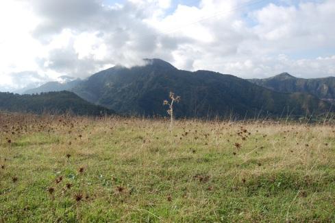 20111111-234613.jpg