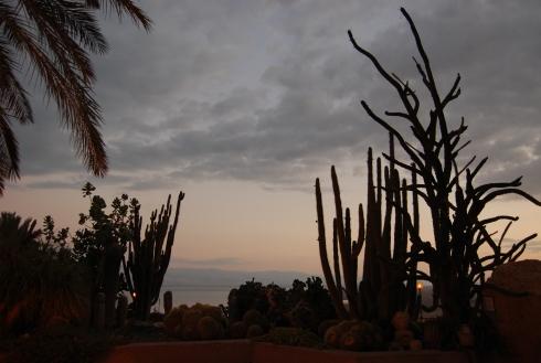 Cacti at Dusk