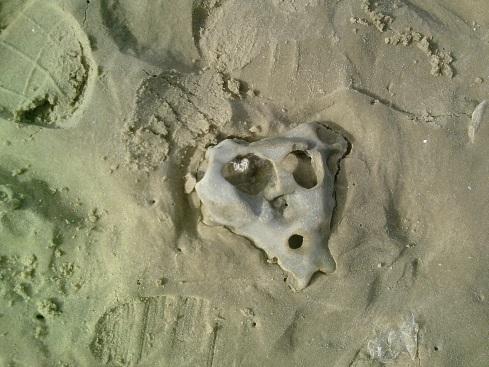 Skull-stone on beach